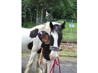 IRISH COB FOR SALE