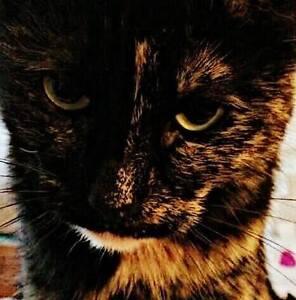 Graphic Design - Enhanced Pet Photos Kitchener / Waterloo Kitchener Area image 9