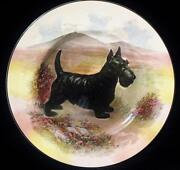 Scottish Terrier Plate