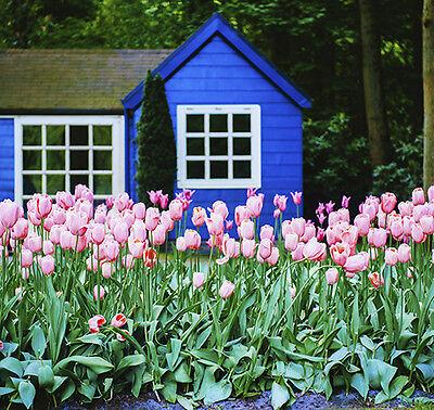 Tulpen gehören zu den Frühlingsblühern und strahlen im März in den schönsten Farben. (© Thinkstock über The Digitale)