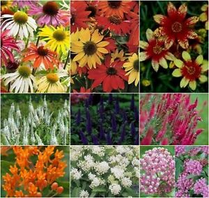 PLANTS FOR SALE - $ 1.00 & up, Over 500 Varieties - Some 50% off