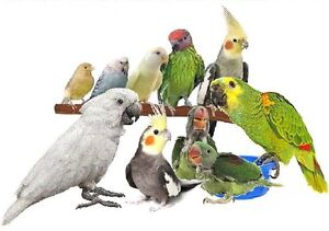 Does your bird need a home?