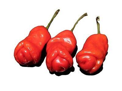 RARE, PEPPER, PETER PENIS, CHILE 10 VEGETABLE SEEDS NON-GMO, Organic, USA SELLER