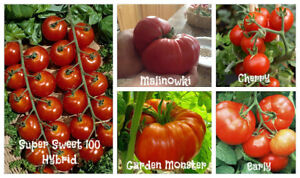 Free Peppers (Hot or Sweet) with Purchase of Tomato Plants