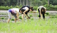 Volunteer in India: Sustainable agriculture and organic farming
