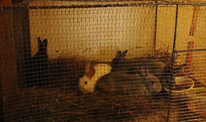 RABBITS FOR SALE! Going Fast!