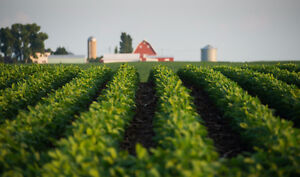 WANTED FARM LAND TO RENT Windsor Region Ontario image 1