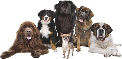 WANDTATTOO Big Dogs & Chihuahua Vinyl-Aufkleber Abziehbild Wandaufkleber Kinder ()