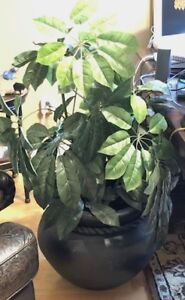 Silk plant with cast iron pot