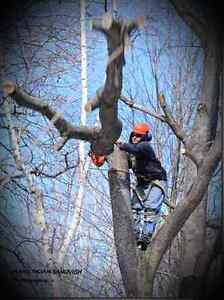 ** AFFORDABLE TREE REMOVAL . .50% OFF!! OCTOBER  SPECIAL!!