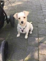 "Young Female Dog - Terrier: ""Peppa"""