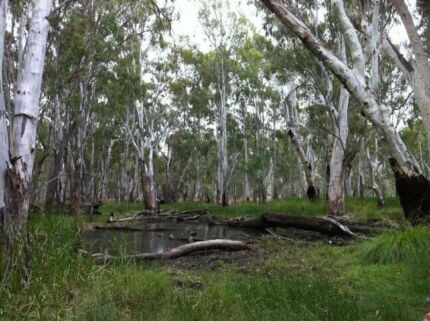 Neimur river frontage forest Moulamein Wakool Area Preview
