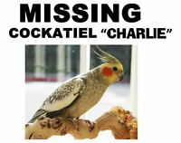 Lost my Male Cockatiel Bird in Bonnie Doom Area from Glen Gorden