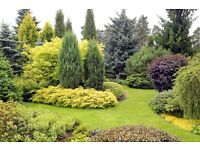 Land wanted to create an evergreen landscape.