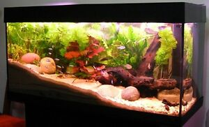 Unwanted Tropical Fish Nairne Mount Barker Area Preview