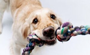 DOGGIE DAY CARE COMING TO GUELPH