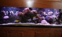 NEW PRICE! 160 Gallon Top Quality Saltwater Reef System