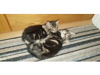 Sweet kittens need new home