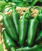 Jalapeno Seeds