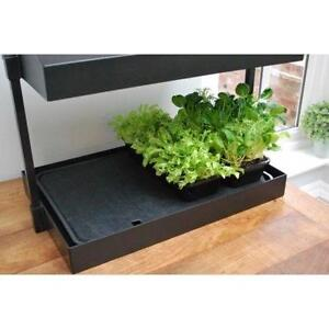 seed water trays