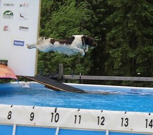 Dock Diving Lessons & Competition in Quesnel, BC!