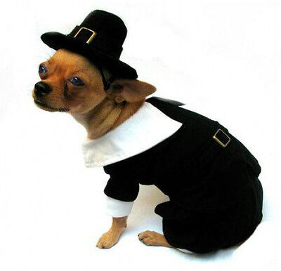 Dog Thanksgiving Costumes (Thanksgiving Pilgrim Boy Dog)