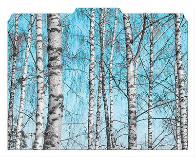 File-n Style Folders - Birch Trees - Cool School Studios - Set Of 12