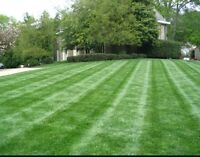 Lawn cutting and rolling