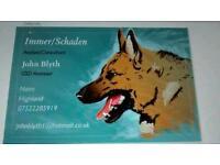 German shepherd Consultant