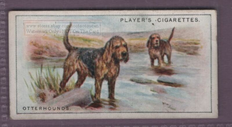 Otterhound Dog Canine Pet 1920s Ad Trade Card