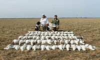 Guided spring snow goose hunting