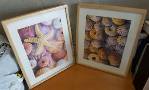 2 Large Shell Pictures