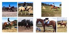 WANTED LEASE HORSE Invermay Launceston Area Preview