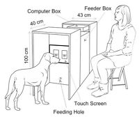 Volunteers needed for dog research questionnaire