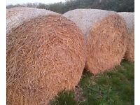 Round Bales of Straw, cheap to be moved asap