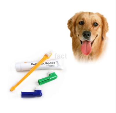 Practical 1 Set Cat Dog Pet Hygiene Teeth Care Toothpaste Toothbrush US
