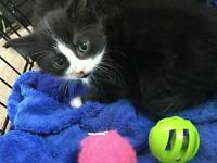 Mixture of black and white kittens.