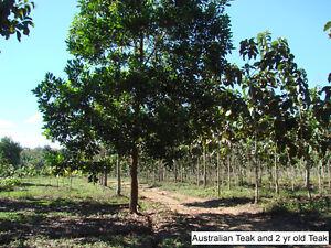 Teak, Mahogany, Rosewood, Cacao Plantation Property Belize Yellowknife Northwest Territories image 4