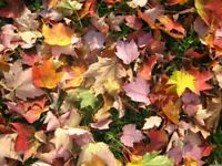 FALL LEAF CLEAN UP // SNOW PLOWING