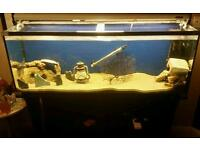4ft Fish tank complete