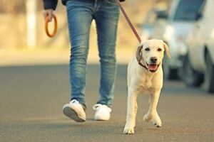 Professional Dog Walker Services in Peterborough