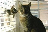 seeking a voluntary feline ACA