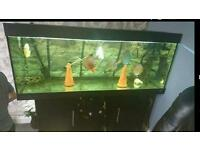 5 foot Fish tank, fx6, discus loads extra