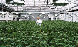 Invest in a Cannabis Micro Cultivation Business in Alberta