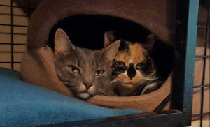 Bonded Cats Looking For a Loving Home