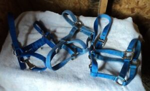 Pony Halters Assorted Sizes Sussex