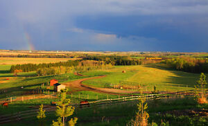 Horse Boarding near Blackfalds/Red Deer/Penhold/Innisfail/Bowden