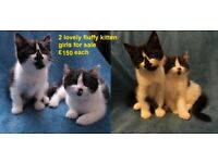 8 weeks kittens ready for new homes