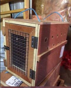 International pet crate. 2 sizes available