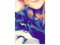 Lost Cat Our 18m black/white cat named Bella has been missing since Wednesday 25th Oct. Black/white